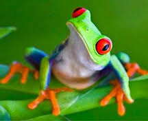 You don't look like a frog! Google Image