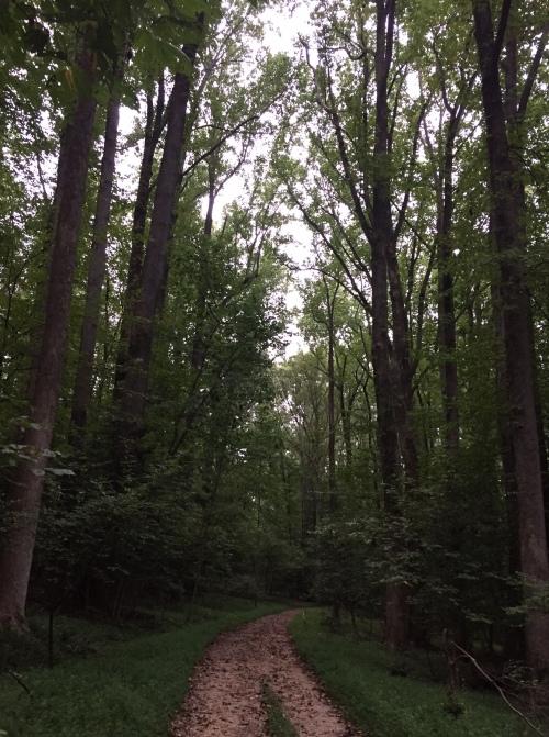 riverbend-path